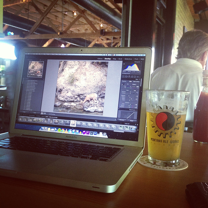 Editing photos from Yellowstone at Montana Ale Works.